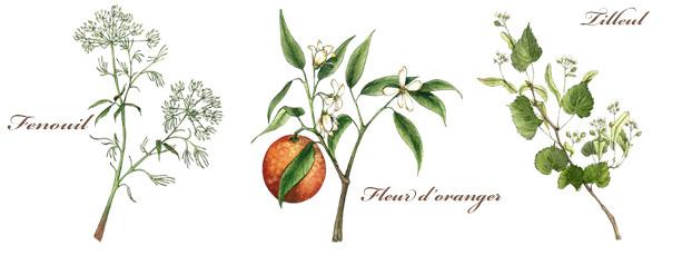 Trois plantes de la Calmosine