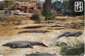ferme-aux-crocodiles2